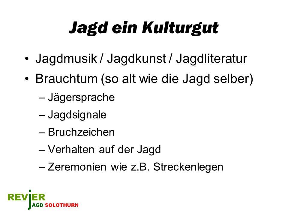 Jagd ein Kulturgut Jagdmusik / Jagdkunst / Jagdliteratur Brauchtum (so alt wie die Jagd selber) –Jägersprache –Jagdsignale –Bruchzeichen –Verhalten au