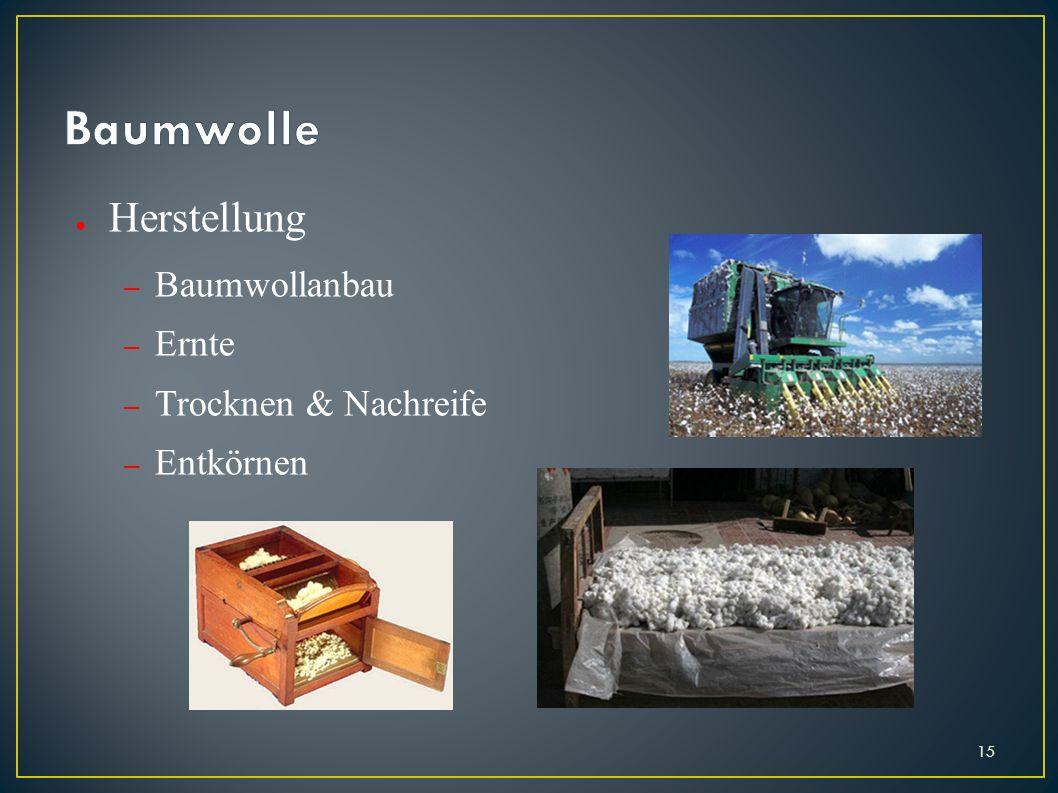 Herstellung – Baumwollanbau – Ernte – Trocknen & Nachreife – Entkörnen 15