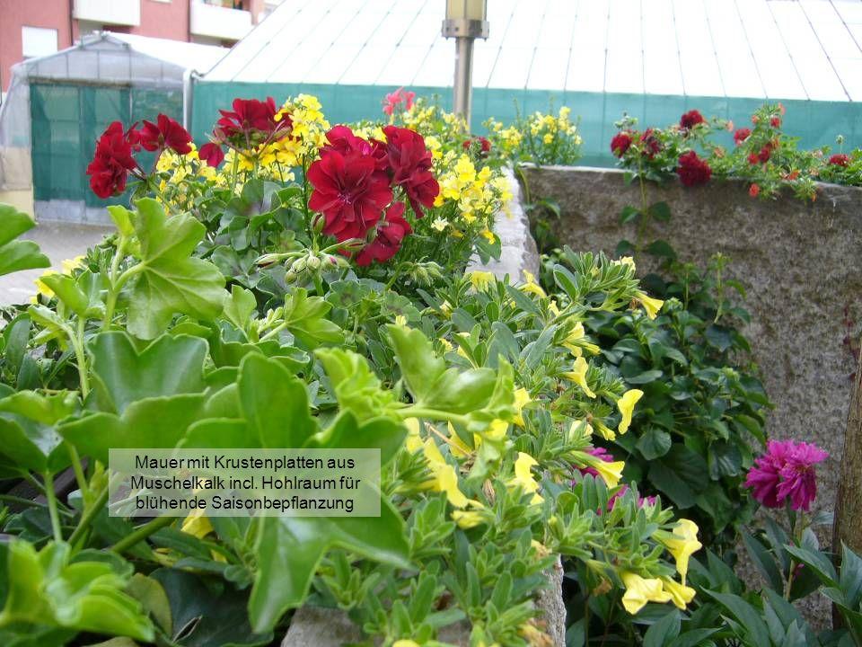 Düngung der Mauerbepflanzung mit dem neuen Gardena-Düngerbeimischgerät