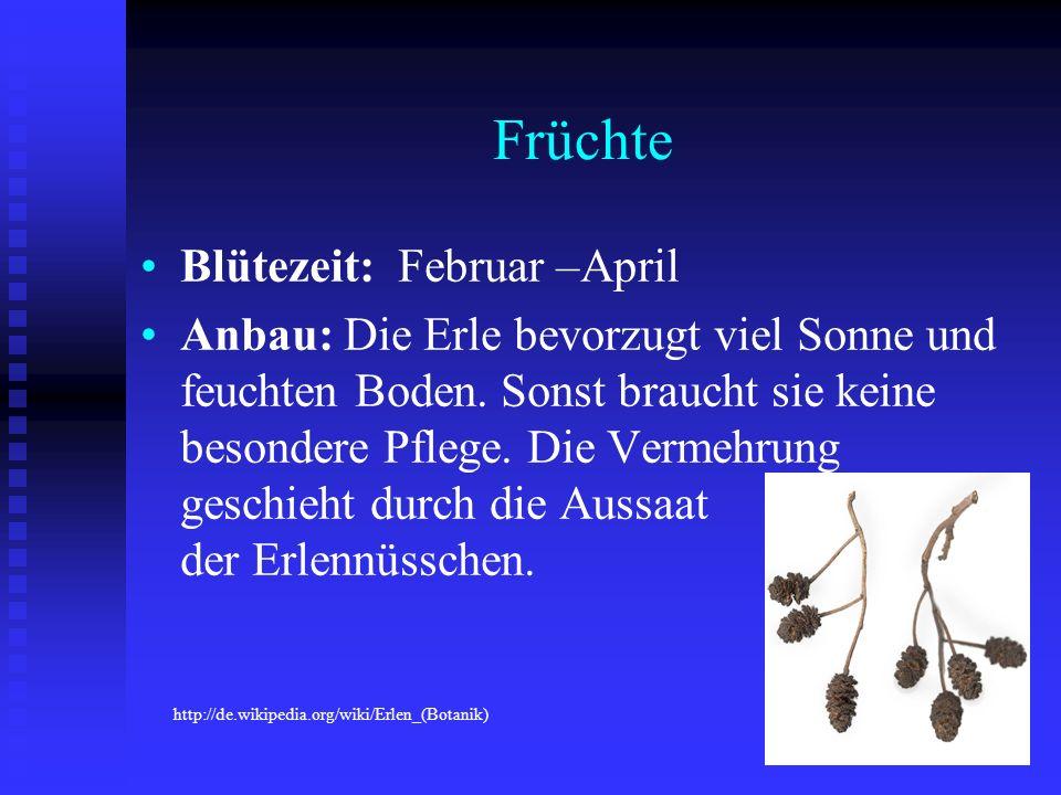 Früchte Blütezeit: Februar –April Anbau: Die Erle bevorzugt viel Sonne und feuchten Boden. Sonst braucht sie keine besondere Pflege. Die Vermehrung ge