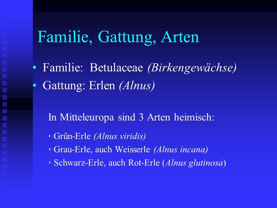 Familie, Gattung, Arten Familie: Betulaceae (Birkengewächse) Gattung: Erlen (Alnus) In Mitteleuropa sind 3 Arten heimisch: Grün-Erle (Alnus viridis) G