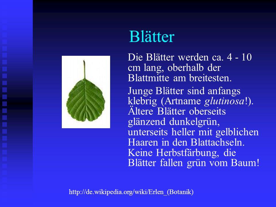 Blätter Die Blätter werden ca. 4 - 10 cm lang, oberhalb der Blattmitte am breitesten. Junge Blätter sind anfangs klebrig (Artname glutinosa!). Ältere