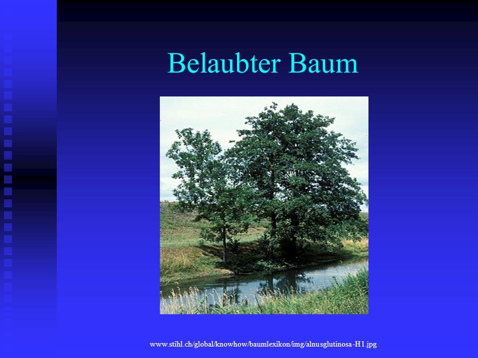 Belaubter Baum www.stihl.ch/global/knowhow/baumlexikon/img/alnusglutinosa-H1.jpg