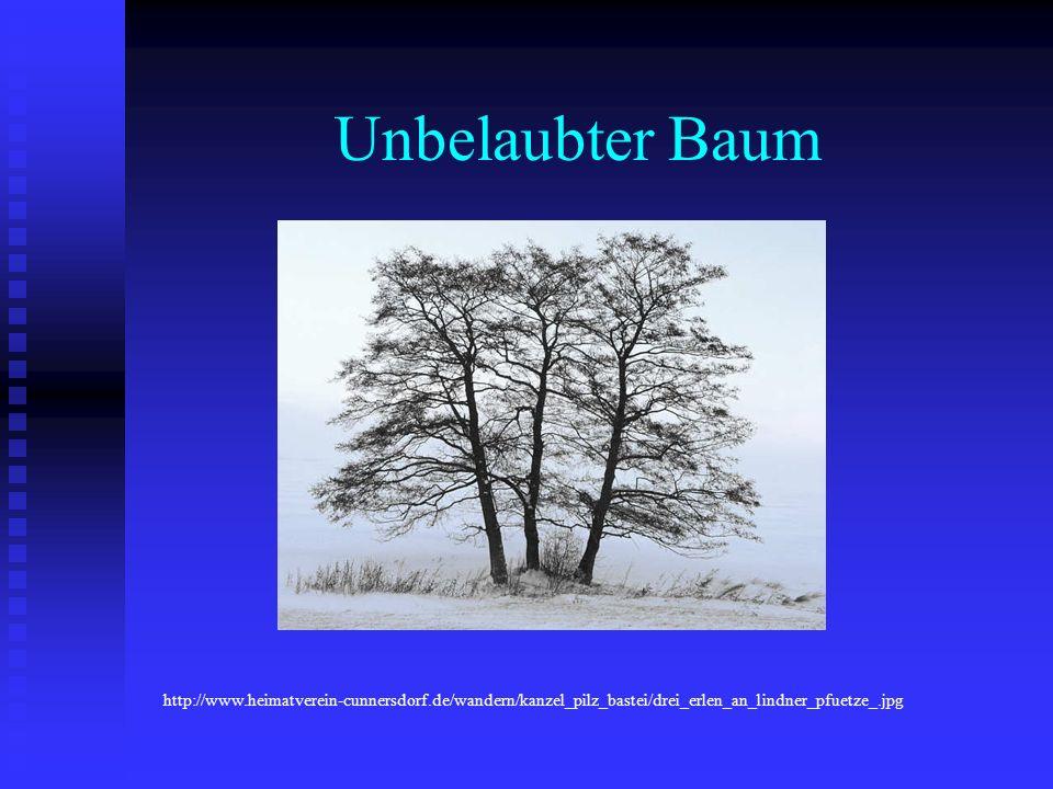 Unbelaubter Baum http://www.heimatverein-cunnersdorf.de/wandern/kanzel_pilz_bastei/drei_erlen_an_lindner_pfuetze_.jpg