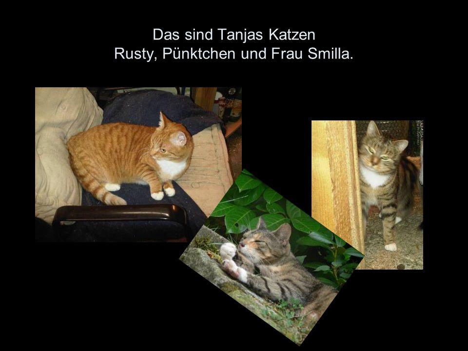 Das sind Tanjas Katzen Rusty, Pünktchen und Frau Smilla.
