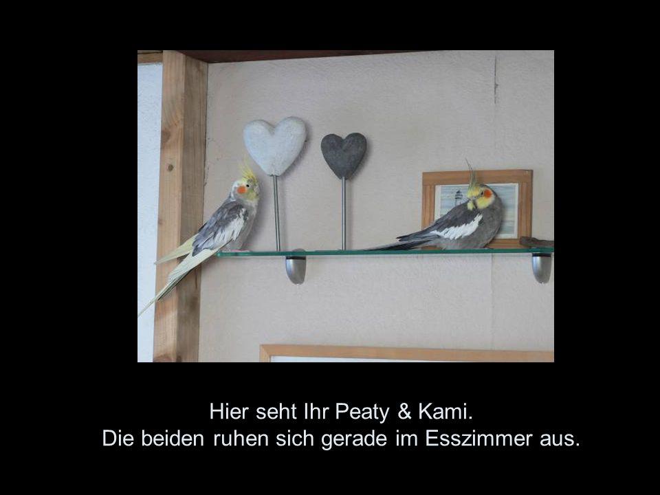 Hier seht Ihr Peaty & Kami. Die beiden ruhen sich gerade im Esszimmer aus.