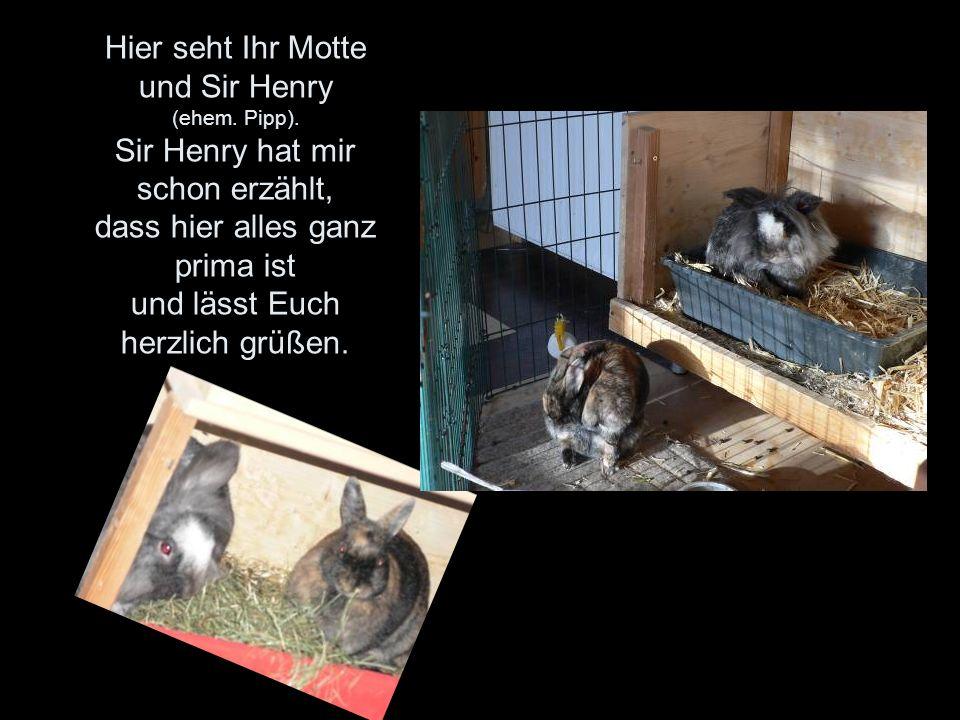 Hier seht Ihr Motte und Sir Henry (ehem. Pipp).
