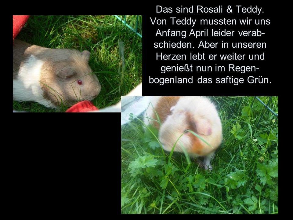 Das sind Rosali & Teddy. Von Teddy mussten wir uns Anfang April leider verab- schieden.