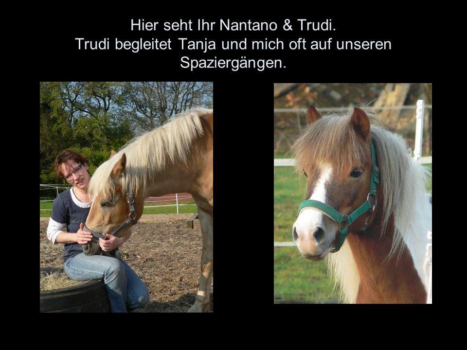 Hier seht Ihr Nantano & Trudi. Trudi begleitet Tanja und mich oft auf unseren Spaziergängen.