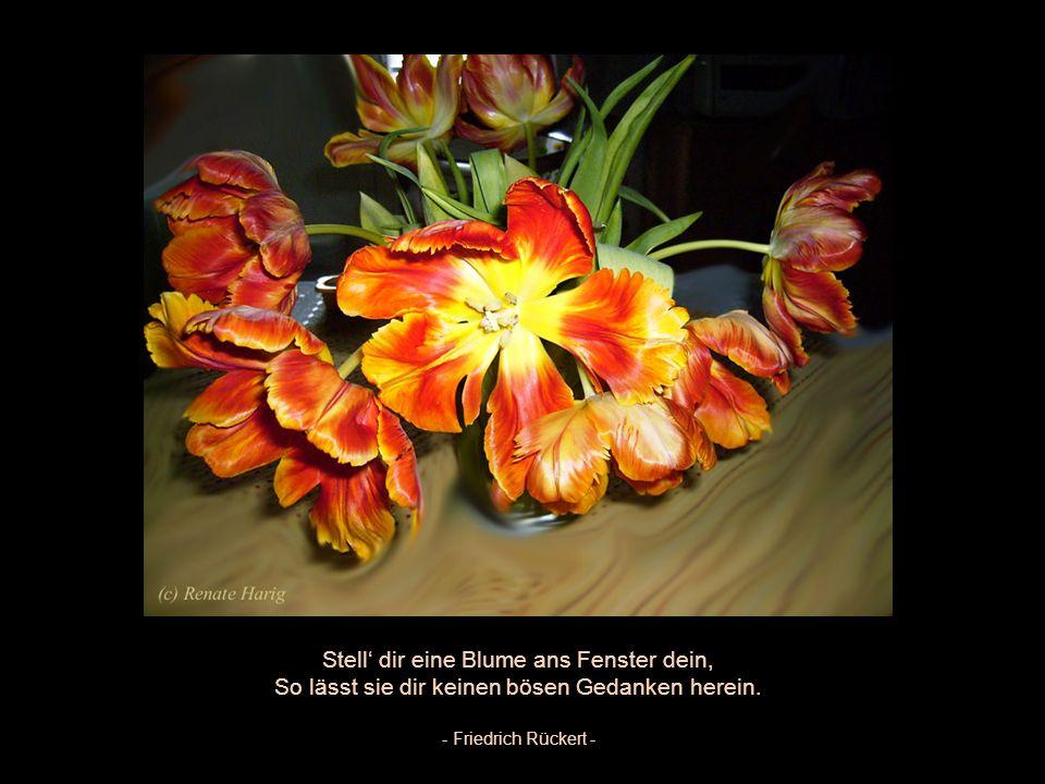 Blumen müssen nicht schön sein. Sie sind es! - Anke M.-Kirsche -