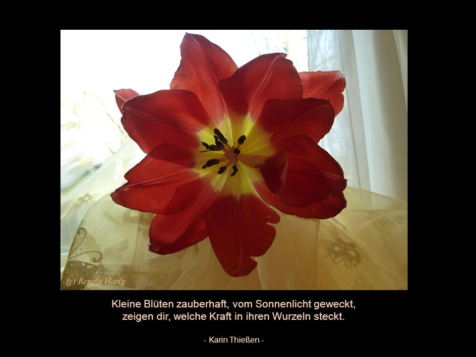 Stell dir eine Blume ans Fenster dein, So lässt sie dir keinen bösen Gedanken herein.