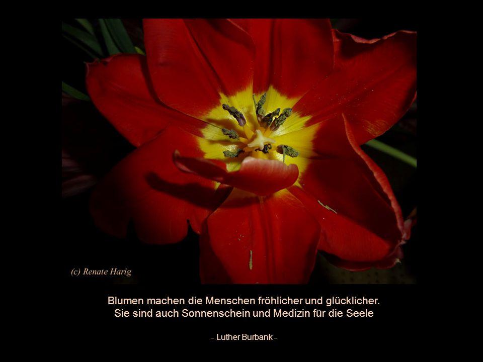 Kleine Blüten zauberhaft, vom Sonnenlicht geweckt, zeigen dir, welche Kraft in ihren Wurzeln steckt. - Karin Thießen -