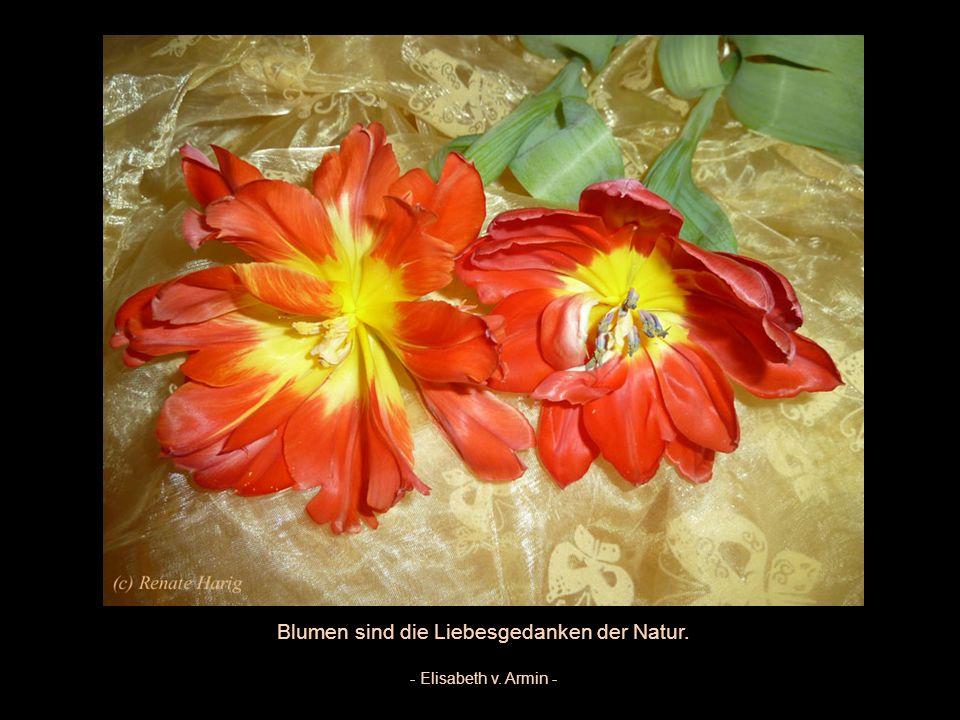 Blumen machen die Menschen fröhlicher und glücklicher. Sie sind auch Sonnenschein und Medizin für die Seele - Luther Burbank -