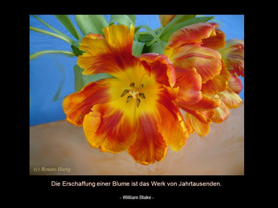 Blumen sind die Liebesgedanken der Natur. - Elisabeth v. Armin -