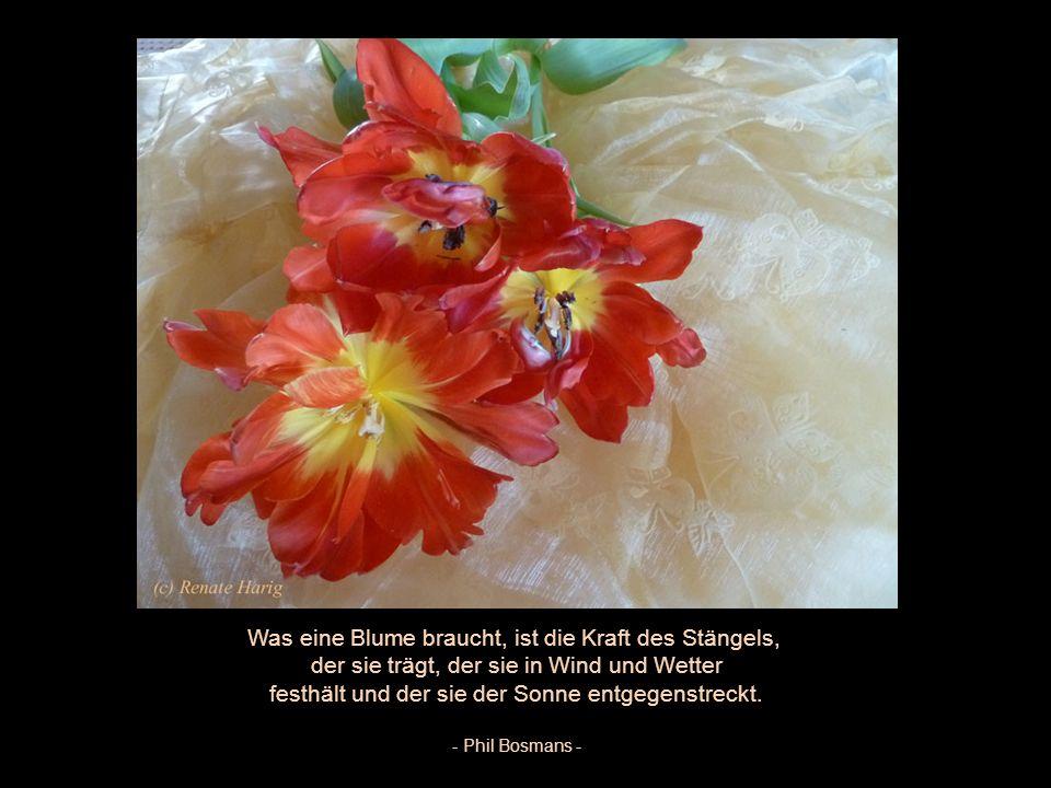 Die Erschaffung einer Blume ist das Werk von Jahrtausenden. - William Blake -