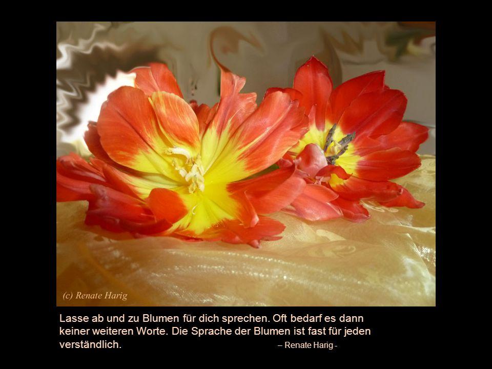 Was eine Blume braucht, ist die Kraft des Stängels, der sie trägt, der sie in Wind und Wetter festhält und der sie der Sonne entgegenstreckt.