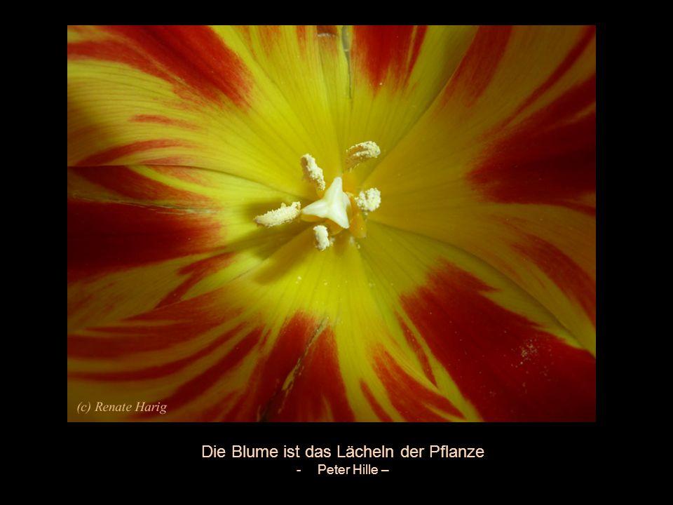 Eine Blume spricht alle Sprachen der Welt