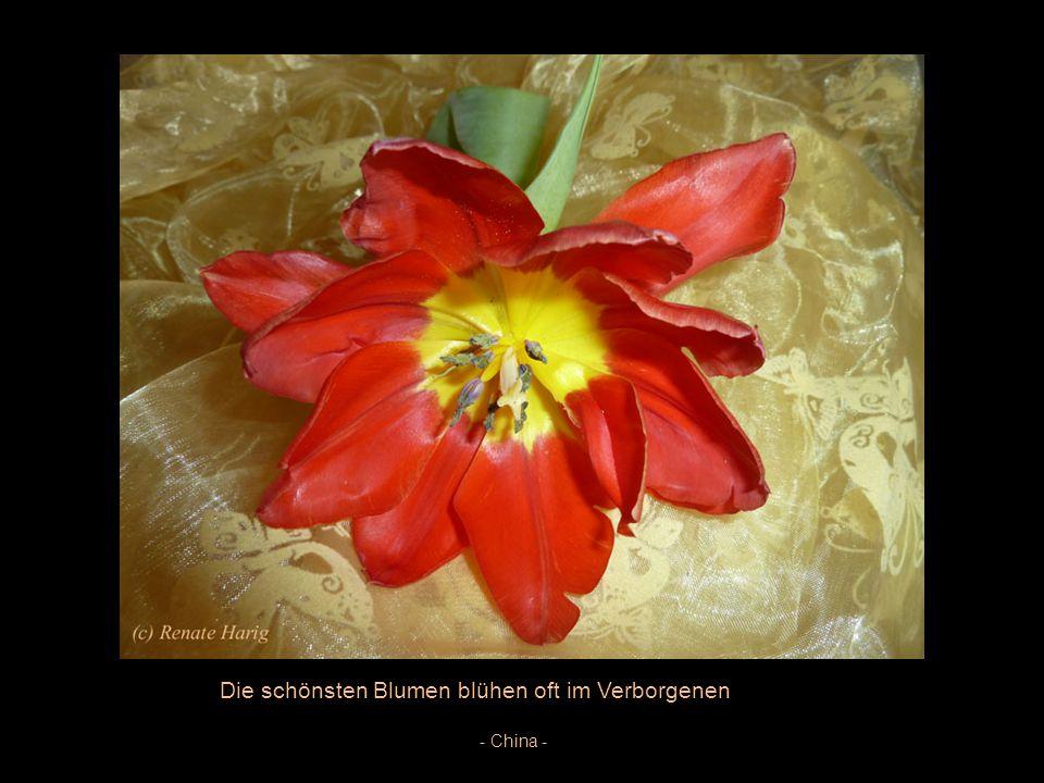 Die Blume ist das Lächeln der Pflanze -Peter Hille –
