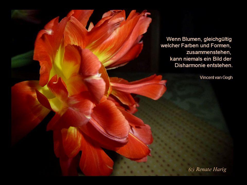 Die schönsten Blumen blühen oft im Verborgenen - China -