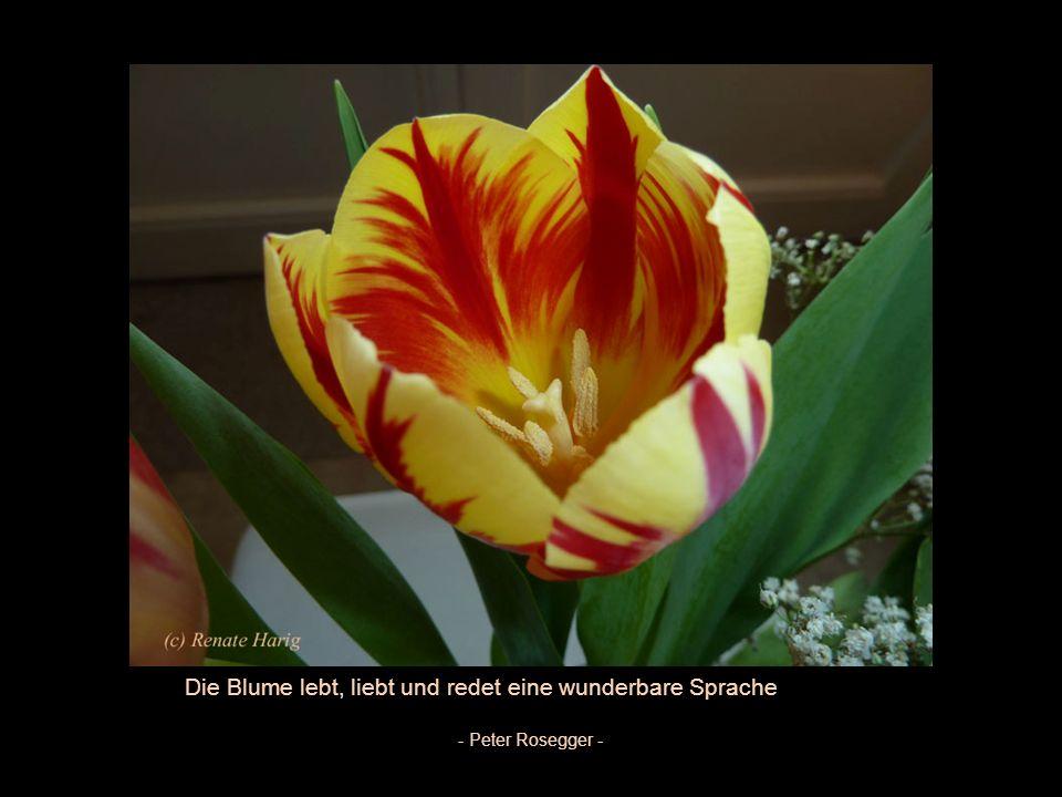 Düfte sind die Gefühle der Blumen Heinrich Heine -