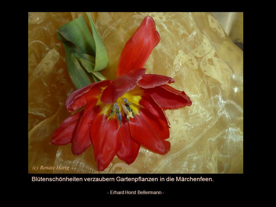 Die Blume lebt, liebt und redet eine wunderbare Sprache - Peter Rosegger -