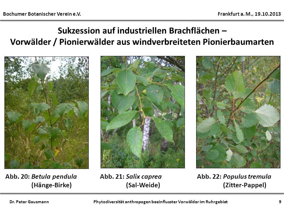 Sukzession auf industriellen Brachflächen – Vorwälder / Pionierwälder aus windverbreiteten Pionierbaumarten Abb. 20: Betula pendula (Hänge-Birke) Abb.
