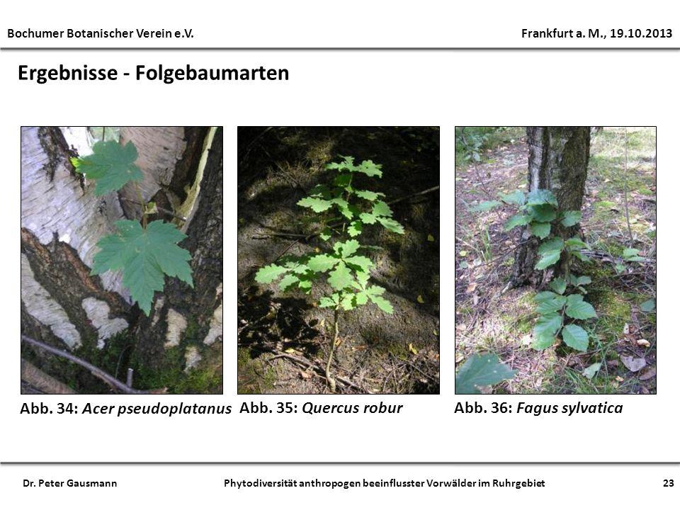 Ergebnisse - Folgebaumarten Abb. 35: Quercus robur Abb. 34: Acer pseudoplatanus Abb. 36: Fagus sylvatica Bochumer Botanischer Verein e.V. Frankfurt a.