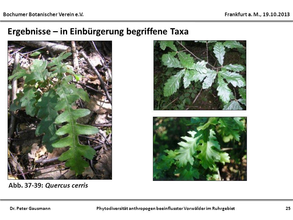 Ergebnisse – in Einbürgerung begriffene Taxa Abb. 37-39: Quercus cerris Bochumer Botanischer Verein e.V. Frankfurt a. M., 19.10.2013 25Dr. Peter Gausm