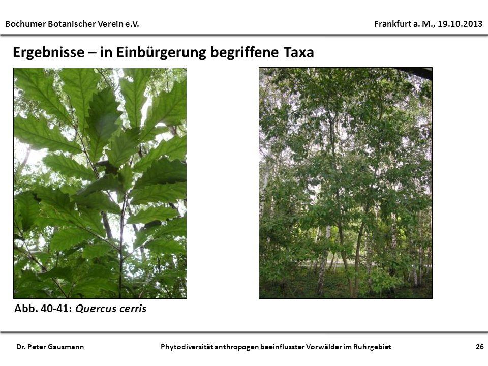 Ergebnisse – in Einbürgerung begriffene Taxa Abb. 40-41: Quercus cerris Bochumer Botanischer Verein e.V. Frankfurt a. M., 19.10.2013 26Dr. Peter Gausm