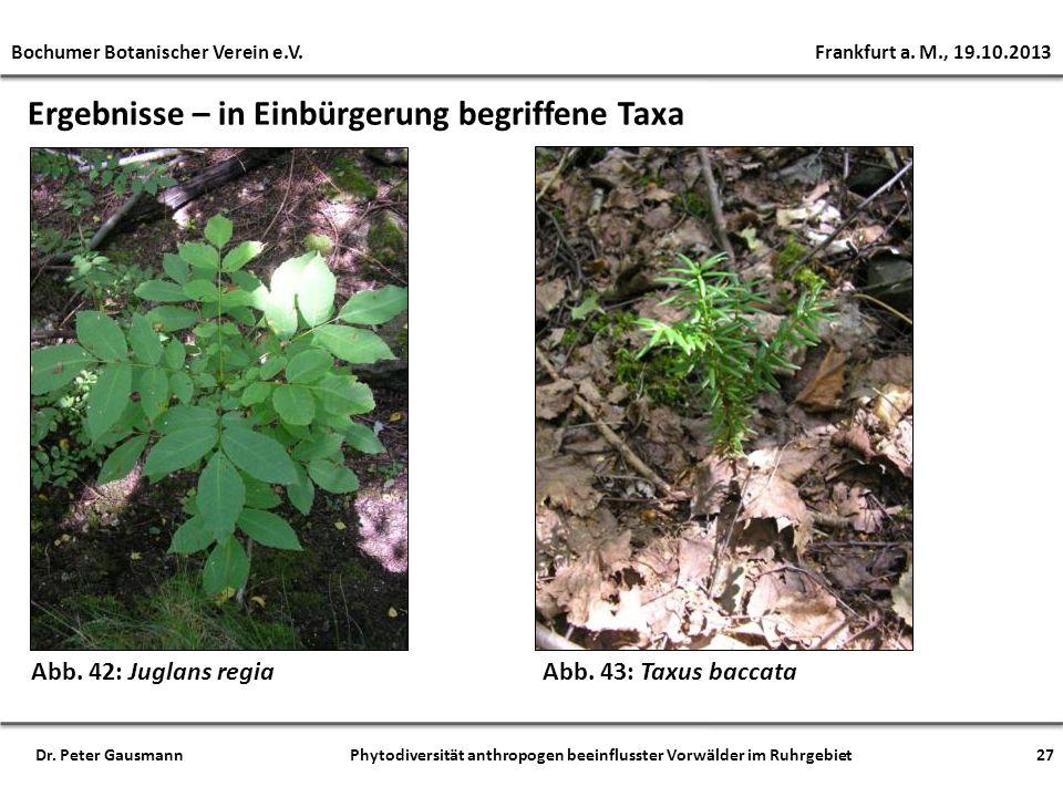 Ergebnisse – in Einbürgerung begriffene Taxa Abb. 42: Juglans regia Bochumer Botanischer Verein e.V. Frankfurt a. M., 19.10.2013 27Dr. Peter Gausmann