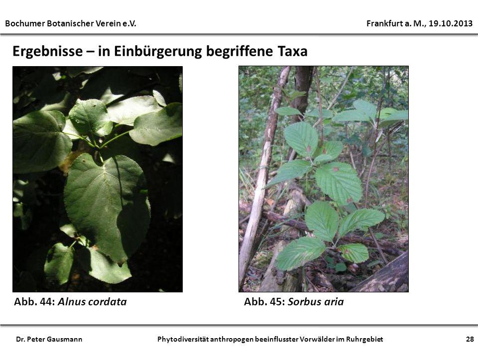 Ergebnisse – in Einbürgerung begriffene Taxa Abb. 44: Alnus cordata Bochumer Botanischer Verein e.V. Frankfurt a. M., 19.10.2013 28Dr. Peter Gausmann