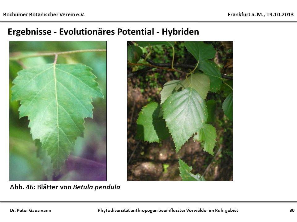 Ergebnisse - Evolutionäres Potential - Hybriden Abb. 46: Blätter von Betula pendula Bochumer Botanischer Verein e.V. Frankfurt a. M., 19.10.2013 Dr. P