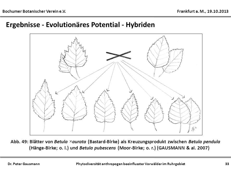 Ergebnisse - Evolutionäres Potential - Hybriden Abb. 49: Blätter von Betula ×aurata (Bastard-Birke) als Kreuzungsprodukt zwischen Betula pendula (Häng