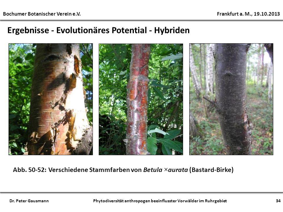 Ergebnisse - Evolutionäres Potential - Hybriden Abb. 50-52: Verschiedene Stammfarben von Betula ×aurata (Bastard-Birke) Bochumer Botanischer Verein e.