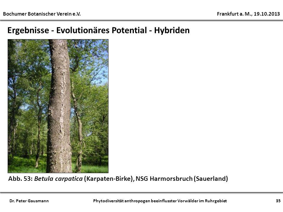 Ergebnisse - Evolutionäres Potential - Hybriden Abb. 53: Betula carpatica (Karpaten-Birke), NSG Harmorsbruch (Sauerland) Bochumer Botanischer Verein e