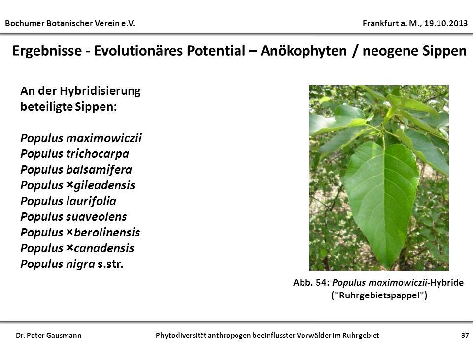 Ergebnisse - Evolutionäres Potential – Anökophyten / neogene Sippen Abb. 54: Populus maximowiczii-Hybride (