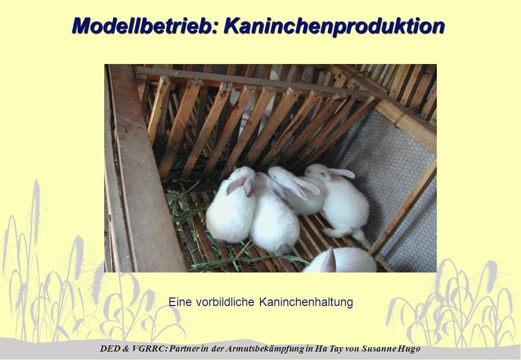DED & VGRRC: Partner in der Armutsbekämpfung in Ha Tay von Susanne Hugo Modellbetrieb: Kaninchenproduktion Eine vorbildliche Kaninchenhaltung