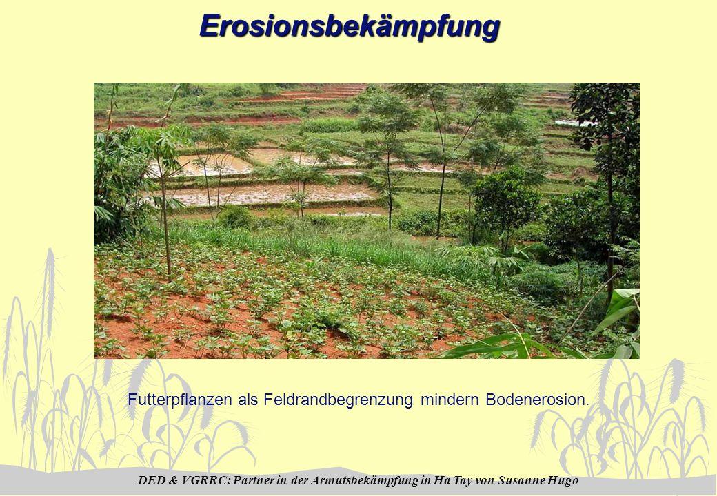 DED & VGRRC: Partner in der Armutsbekämpfung in Ha Tay von Susanne HugoErosionsbekämpfung Futterpflanzen als Feldrandbegrenzung mindern Bodenerosion.