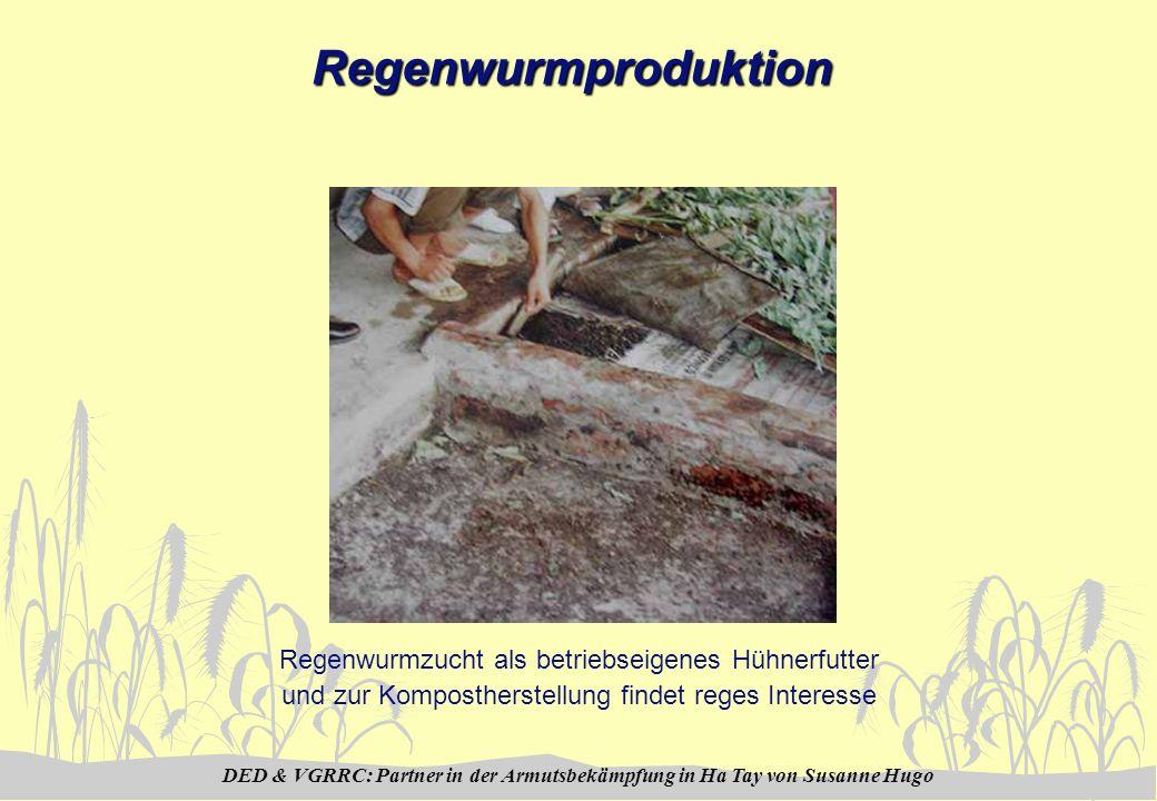 DED & VGRRC: Partner in der Armutsbekämpfung in Ha Tay von Susanne HugoRegenwurmproduktion Regenwurmzucht als betriebseigenes Hühnerfutter und zur Kompostherstellung findet reges Interesse