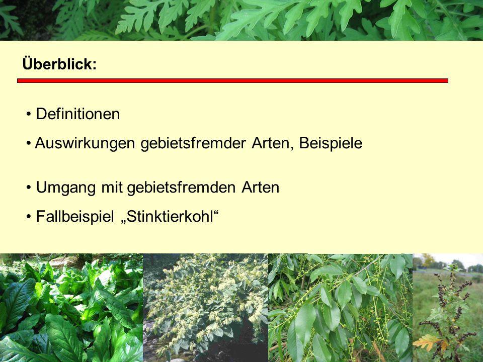 Definitionen Auswirkungen gebietsfremder Arten, Beispiele Umgang mit gebietsfremden Arten Fallbeispiel Stinktierkohl Projektgruppe Biodiversität und L