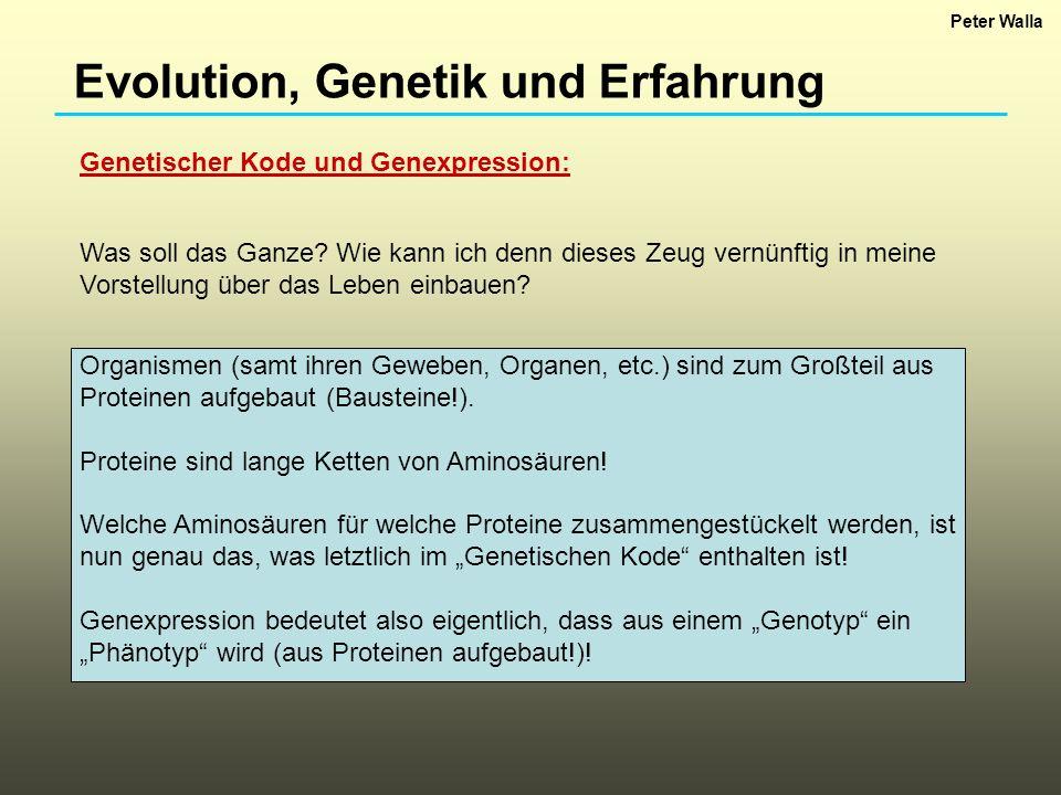 Evolution, Genetik und Erfahrung Genetischer Kode und Genexpression: Organismen (samt ihren Geweben, Organen, etc.) sind zum Großteil aus Proteinen au