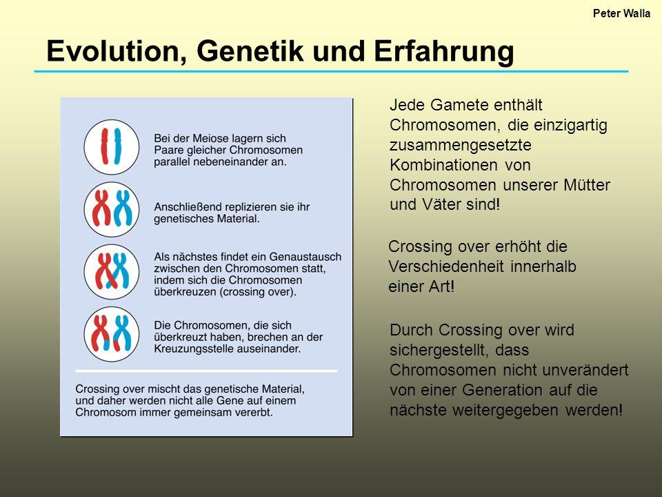 Evolution, Genetik und Erfahrung Take Home Message: Crossing over mischt die genetischen Karten, bevor die Chromosomen zufällig an die nächste Generation verteilt werden.