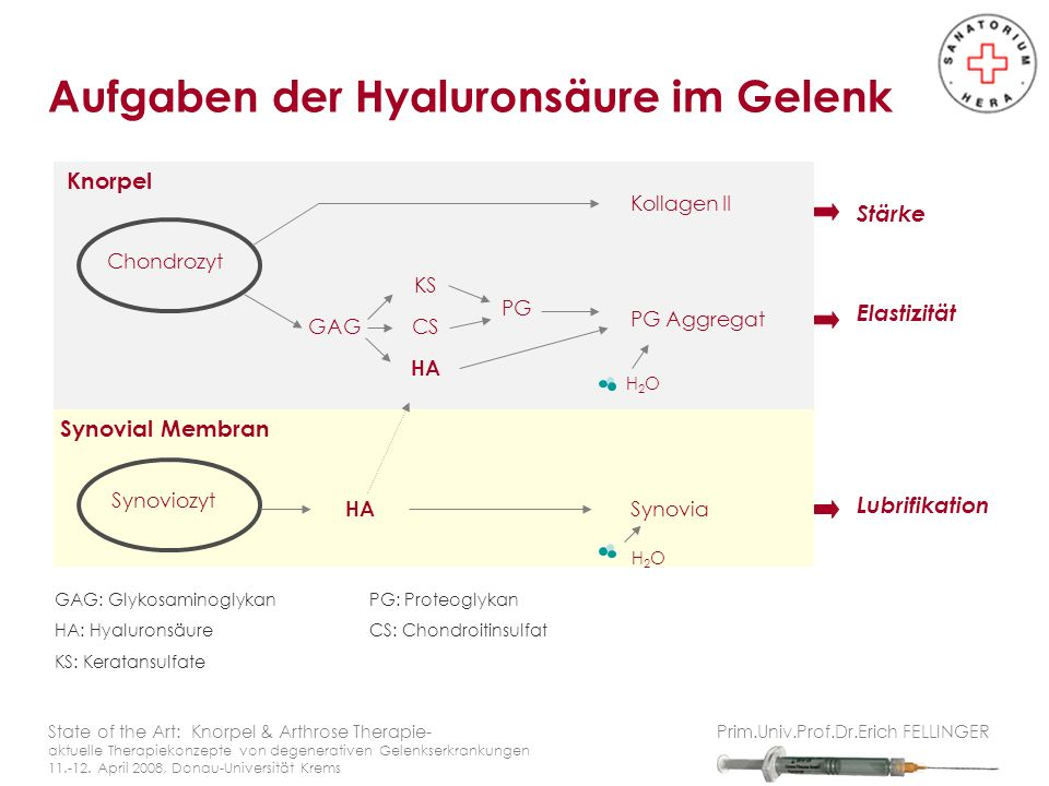 HA wird in der Zellmembran von Hyaluronan Synthasen synthetisiert Molekulargewicht: 10 6 -10 7 Dalton Synthese Zytokin-reguliert (TGF, PDGF, ILs, TNF..) State of the Art: Knorpel & Arthrose Therapie- aktuelle Therapiekonzepte von degenerativen Gelenkserkrankungen 11.-12.
