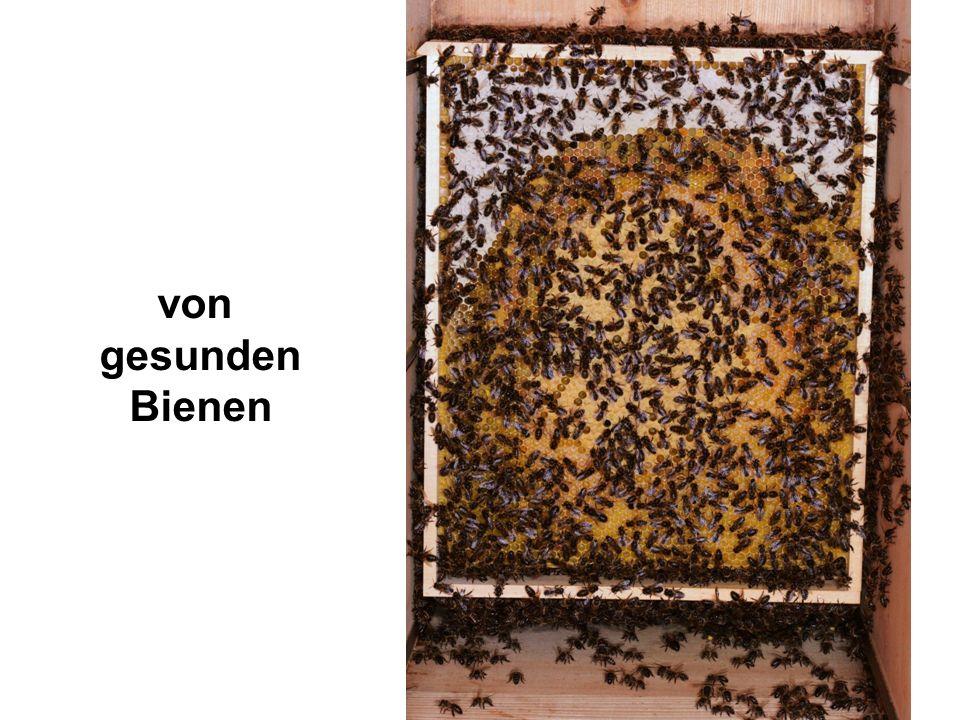 von gesunden Bienen