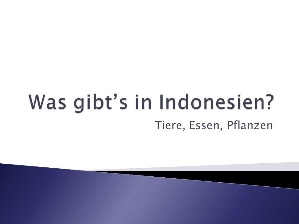 speziell in Sumatra (tropischer Regenwald)