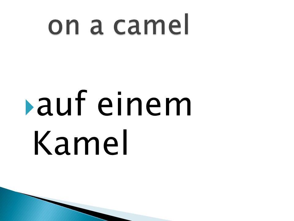 auf einem Kamel