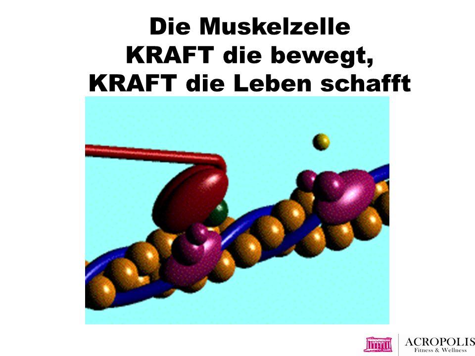Die Muskelzelle KRAFT die bewegt, KRAFT die Leben schafft