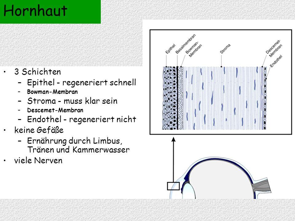 3 Schichten –Epithel - regeneriert schnell –Bowman-Membran –Stroma - muss klar sein –Descemet-Membran –Endothel - regeneriert nicht keine Gefäße –Ernährung durch Limbus, Tränen und Kammerwasser viele Nerven Hornhaut