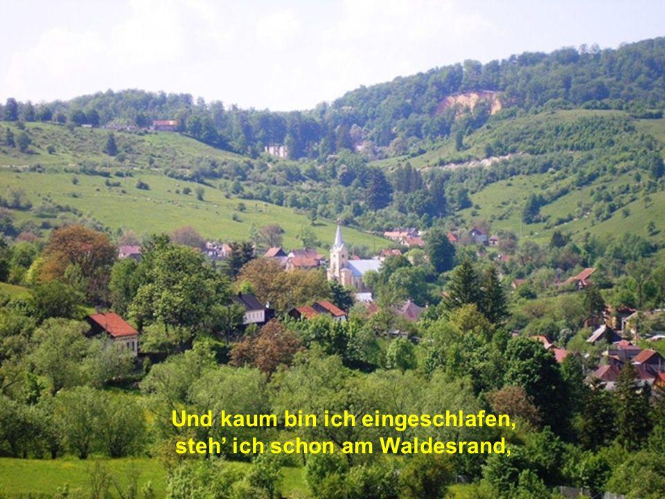 stehen auf dem Mühlenkogel und ins Tal hinuntersehn.
