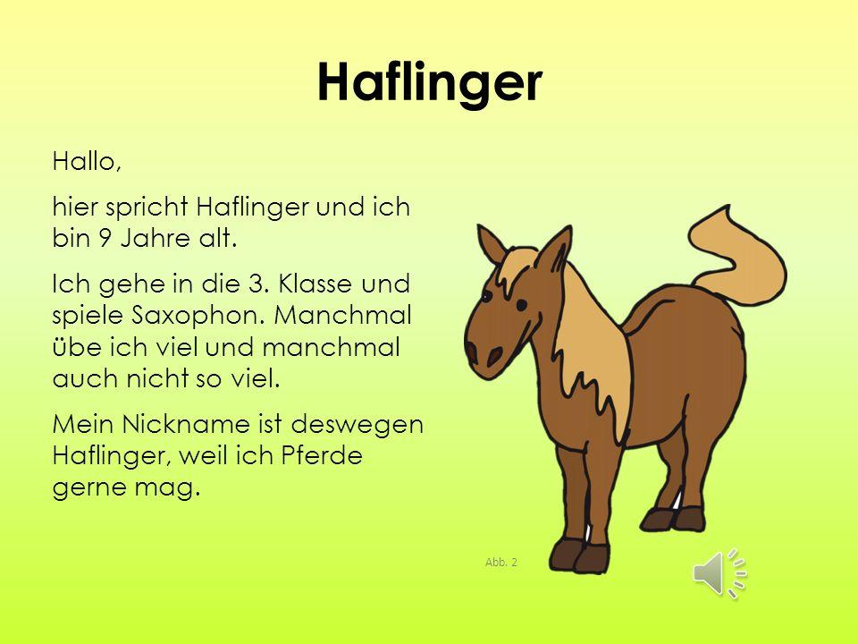 Haflinger Hallo, hier spricht Haflinger und ich bin 9 Jahre alt.